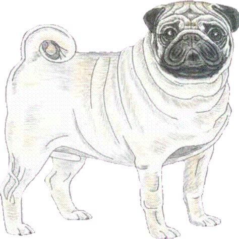 sponsor a pug uk important notice