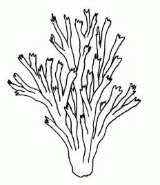coral reef clipart black and white coral reef clip cliparts co