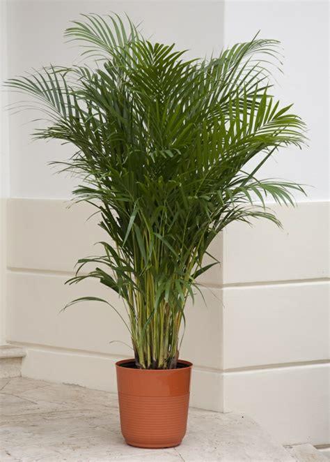 Beliebte Zimmerpflanzen Bilder by Die Beliebtesten Zimmerpflanzen Deutschlands