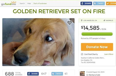 golden retriever rescue los angeles area who doused golden retriever with acid lovable pooch left for dead now on the mend