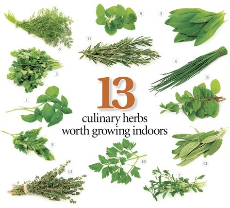 growing herbs inside 13 herbs to grow in your kitchen with tips on getting