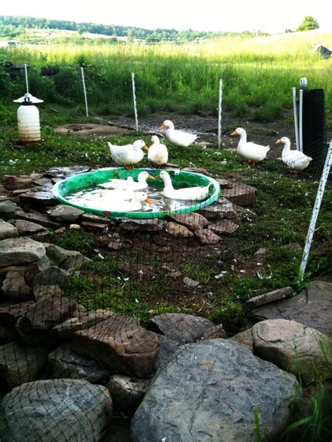 triyae a backyard duck pond various design