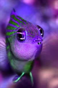 what color are fish color fish the sea