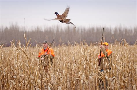how to a to bird hunt prepper dome