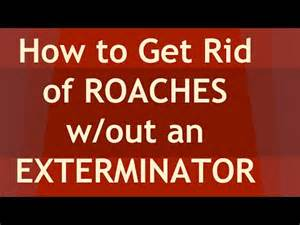 7 tips on how to get rid of roaches without an