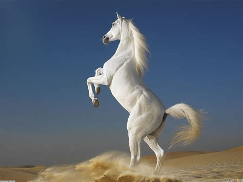 white horse wallpaper 12598 open walls