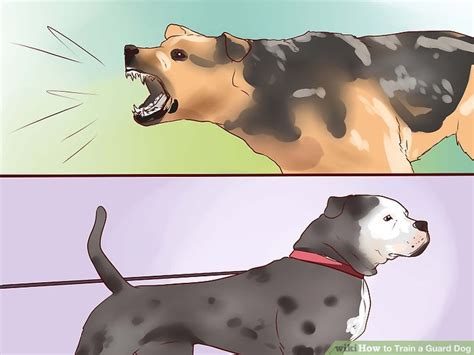 how to a puppy to be a guard 3 ways to a guard