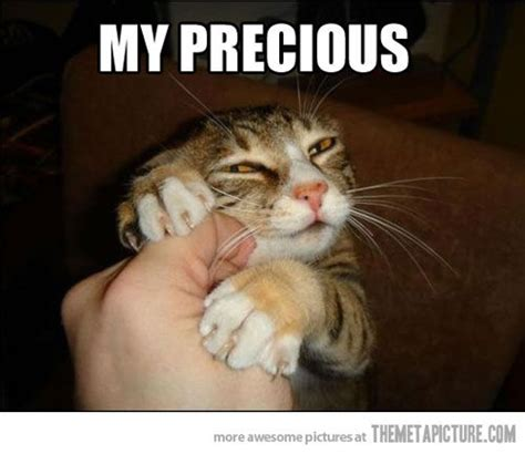Funny Cat Meme - 25 funny cat pictures with captions entertainmentmesh