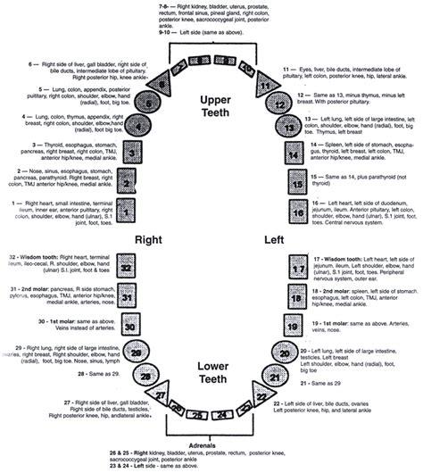 dental chart dental issues