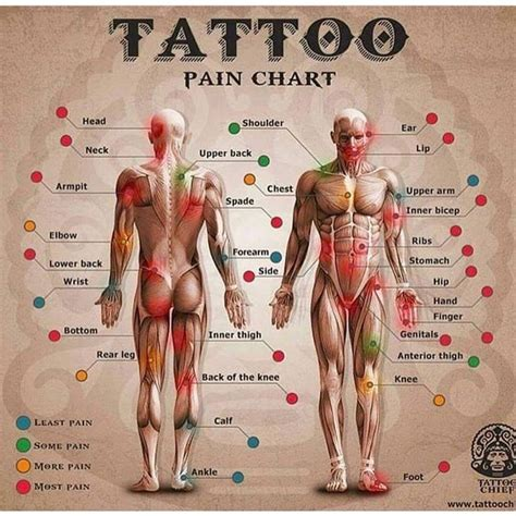 tattoo pain the next day 90 best tattoo images on pinterest tattoo designs