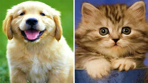 puppies vs kittens puppies vs kittens