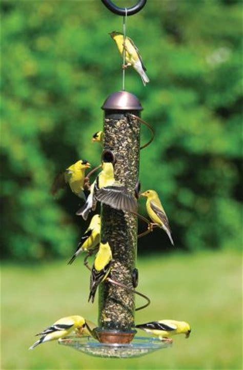 top ten essential bird feeding tips your should know