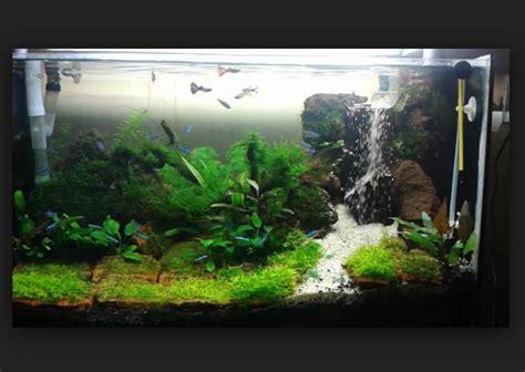 cara membuat aquascape yang indah tips mudah cara membuat aquascape pada aquarium yang murah