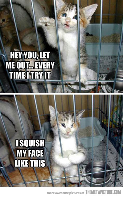 Cute Funny Cat Memes - funny pictures funny facebook photos funny jokes funny