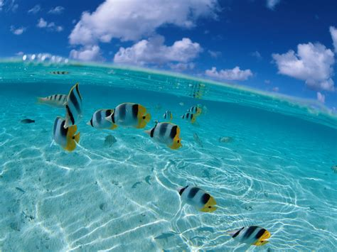 fond de bureau fond 233 cran poissons tropicaux chezmaya
