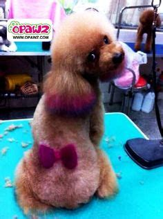 pomeranian hair dye doggie hair dye on creative grooming hair dye and grooming