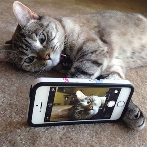 nala design instagram the story of instagram s most famous cat nala who has 3