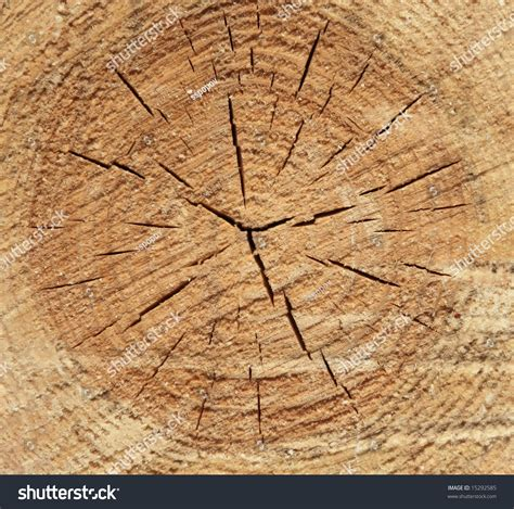 cross section cut cross section cut of a pine on a building wooden bar stock