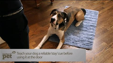 How To Teach Your To Stay The by Teach Your To Stay At The Door S Pet With
