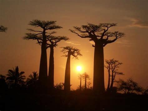 madagascar turisti per caso madagascar isola dei baoba viaggi vacanze e turismo
