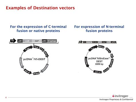 exle of vector ppt the gateway 174 cloning system powerpoint presentation