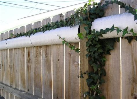 how to keep your cat in the backyard gardens at the top and backyards on pinterest