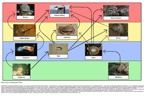 catena alimentare esempi esempi catena alimentare catena alimentare definizione e