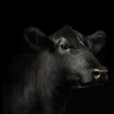 animal feeds purina mills animal feed supplements l purina