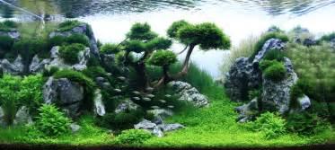 Aquascaping Tall Tanks Des Paysages D Aquariums