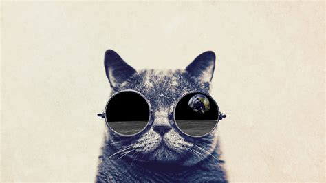 wallpaper cat with sunglasses cute cats wallpaper with sunglasses desktop wallpapers