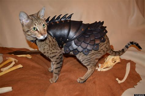 Cat Leather by Cat Battle Armor Is Battle Armor For Your Cat Photos
