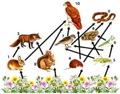 cadenas alimentarias ejemplos yahoo 191 cual es la diferencia entre cadena trofica y cadena