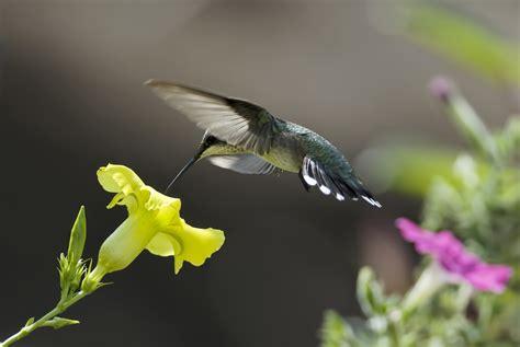 colibr fondos de pantalla 1920x1200 432 hummingbird full hd wallpaper and background image