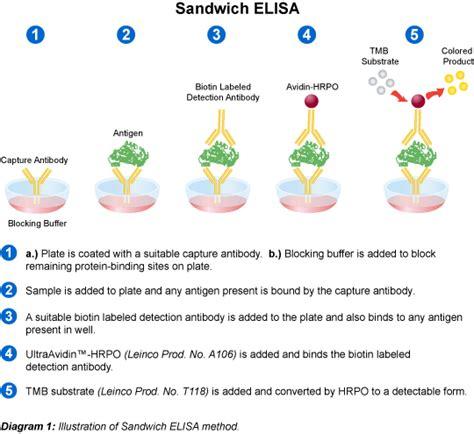 eia test leinco technologies 187 antibody elisa