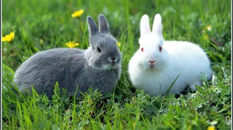 grey rabbit wallpaper rabbit ipad air wallpapers top and high quality hd
