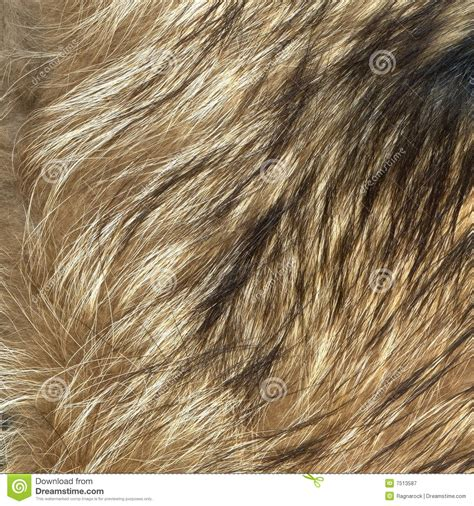 Brown Fur Rug by Wolf Fur Texture To Background Stock Image Image 7513587