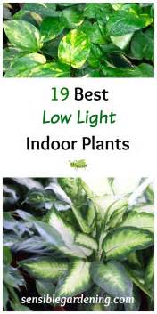best indoor low light plants 19 best low light indoor plants sensible gardening and