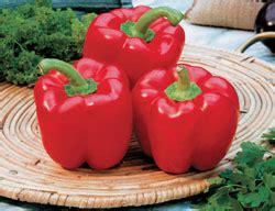 Biji Paprika Merah jual bibit sayuran jual bibit bunga murah
