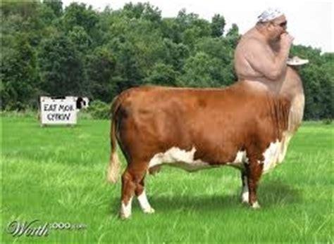 imagenes de animales raros y feos 8 los animales mas feos raros y graciosos animales