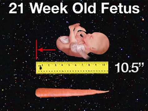 Looks Of The Week Fabsugar Want Need 21 by Fetal Development Week 21 Pregnancy Health Guru