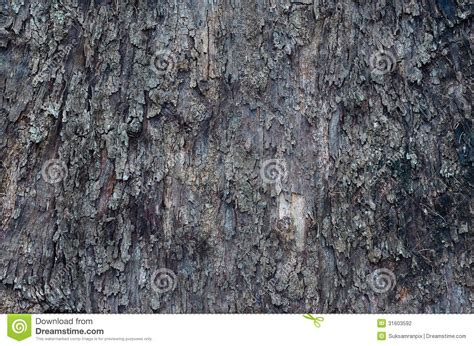 bark of pine tree stock photography image 31603592