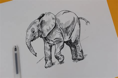 leaving puppy in playpen while at work how to draw an elephant in just 5 easy steps