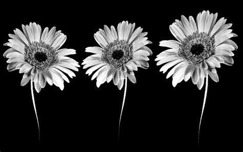 black and white wallpaper online flower black and white clip art flowers clipart 8 clipgoo