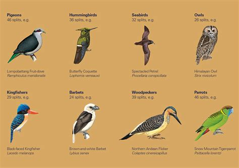 Bird Figures hbw and birdlife international illustrated checklist of