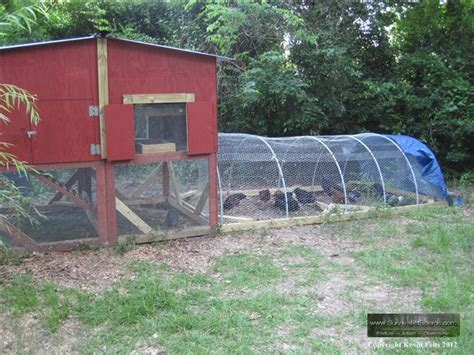 how much room do you need around a pool table raising a chicken flock for shtf survivalist forum