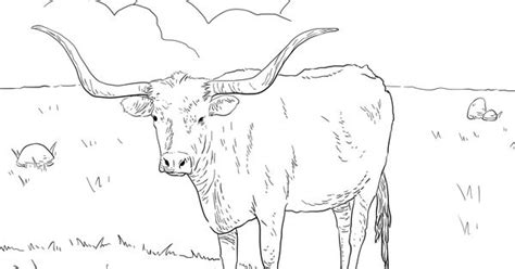 texas longhorn  coloring page  printable coloring