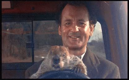 bill murray groundhog day xavier groundhog day driving gif groundhogday billmurray