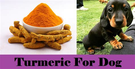 is turmeric safe for dogs health care at home