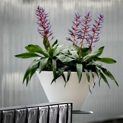 vasi per piante in resina 29 best vasi per piante images on garden