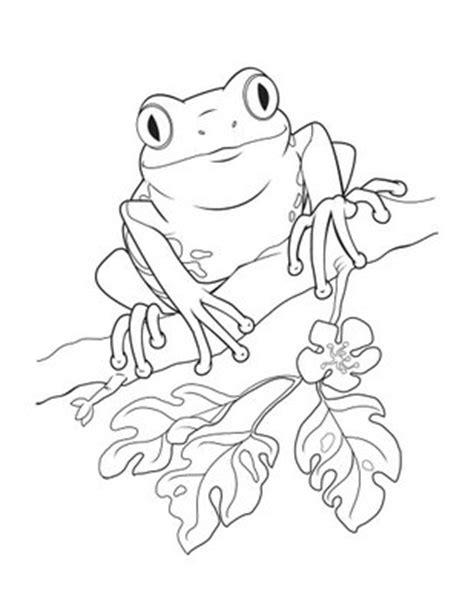 coqui frog coloring page la literatura y el arte de la escritura